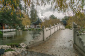 Martha Benedict - Chinese Garden in the Rain, Huntington Botanical Gardens