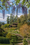 Martha Benedict - Japanese Garden with Wisteria, Huntington Botanical Gardens