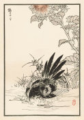 Kono Bairei - Bairei Picture Album of One Hundred Birds, plate 13, 1881- 1884