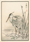 Kono Bairei - Bairei Picture Album of One Hundred Birds, plates 17/18, 1881- 1884