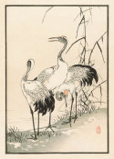 Kono Bairei - Bairei Picture Album of One Hundred Birds, plate 38, 1881- 1884