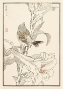 Kono Bairei - Bairei Picture Album of One Hundred Birds, plate 6, 1881- 1884