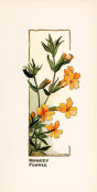 Elisabeth M. Hallowell - Monkey Flower, ca. 1905