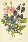 Anne Pratt - Columbine, Larkspur, Monk's-hood, and Bane-berry, 1873