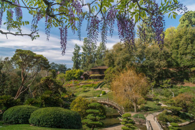 Martha Benedict - Japanese Garden in Spring at the Huntington Botanical Gardens