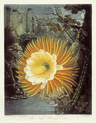 Robert John Thornton - The Night-Blooming Cereus, 1803
