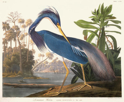 John James Audubon - Louisiana Heron, 1831 - 1834