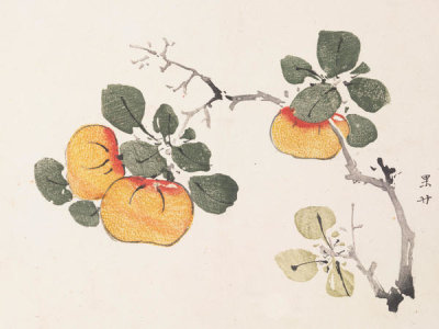 Ten Bamboo Studio - Red Tangerine, 1633 (Ming Dynasty)