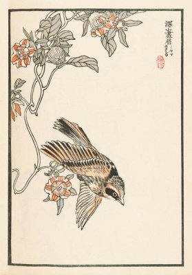 Kono Bairei - Bairei Picture Album of One Hundred Birds, plate 14, 1881- 1884
