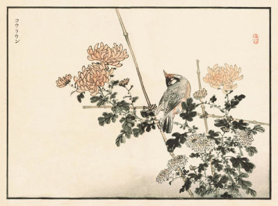 Kono Bairei - Bairei Picture Album of One Hundred Birds, plates 23/24, 1881- 1884