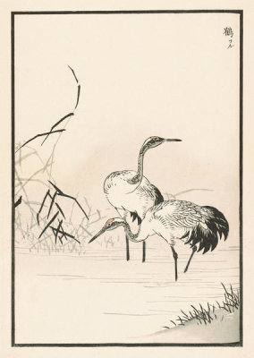 Kono Bairei - Bairei Picture Album of One Hundred Birds, plate 37, 1881- 1884