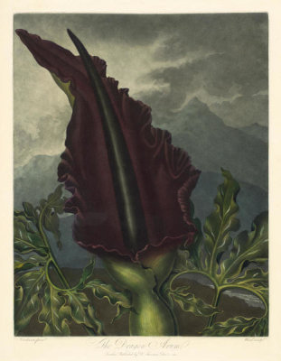 William Ward - The Dragon Arum, 1798-1807