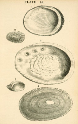Josiah Keep - Abalone, Limpet, and Slipper shells of California, 1881