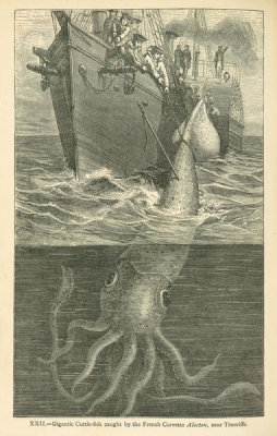 Louis Figuier - Giant cuttle-fish caught by the French Corvette Alecton, near Tenerife, 1869