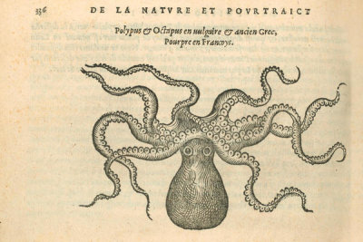 Pierre Belon (author) - La Pourpre (Octopus), 1553