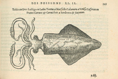 Pierre Belon (author) - Le Casseron (Squid), 1553