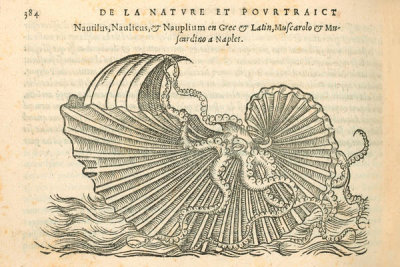 Pierre Belon (author) - Nautilus, 1553